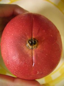 b100603-Mango1.JPG