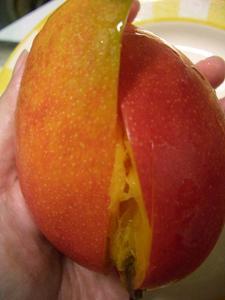 b100603-Mango2.JPG